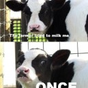 The farmer tried to milk me once