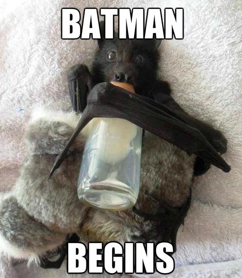 To The Batcrib