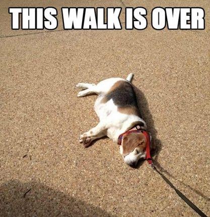 Walk Over