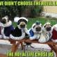 We Didnt Choose The Royal Life