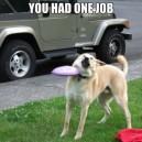 You Had One Job, Dog