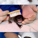 Adorable Baby Monkeys