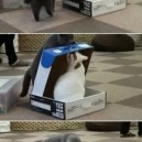 Cats are jerks