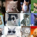 Emotics Cats