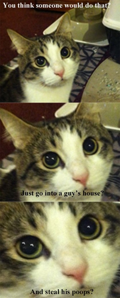 Every time I change the litter box
