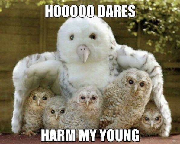 Hoooo Dares