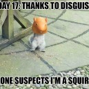Infiltrated squirrel