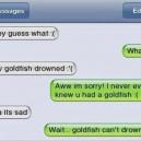 Poor Goldfish