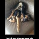 Smartass dog