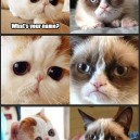 Snoopy Cat Meets Grumpy Cat