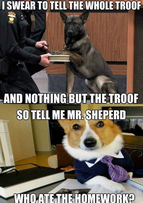 The Lawyer Dog