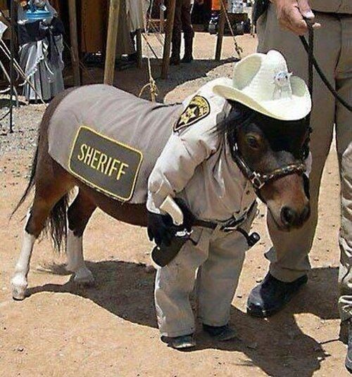 Budget Cuts Hit Police Force