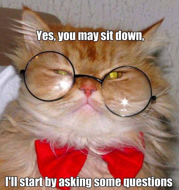 Cat interview