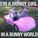 C'mon bunny let's go party!