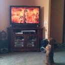 Dog Copies TV Animals
