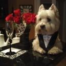 Dog's a Real Gentlemen