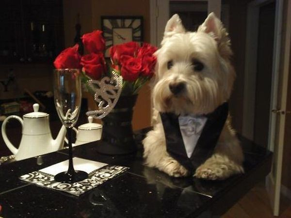 Dog's a Real Gentlemen