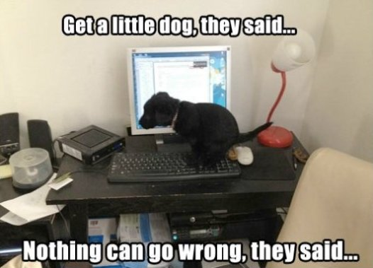 Get a dog…