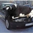 Interesting Car Warmer