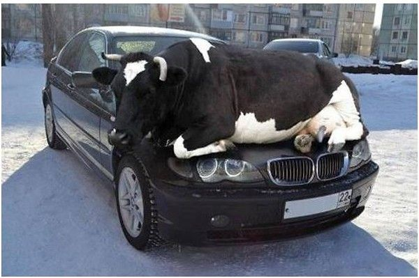Interesting Car Warmer
