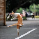Just a normal dancing cat