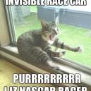 Racer Cat