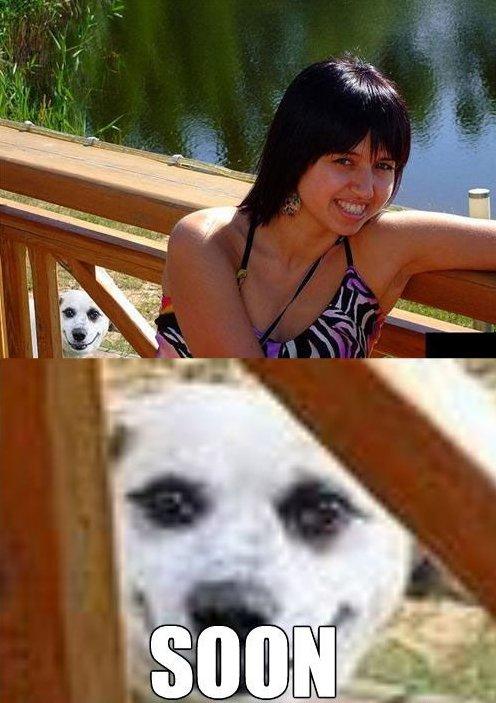 Stalker Dog