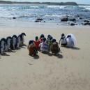 The Penguin Wedding