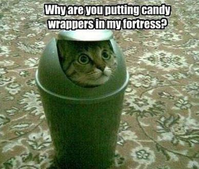 Trash Talking Cat