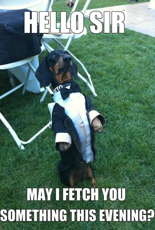 Waiter Dog