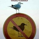 Badass Seagull
