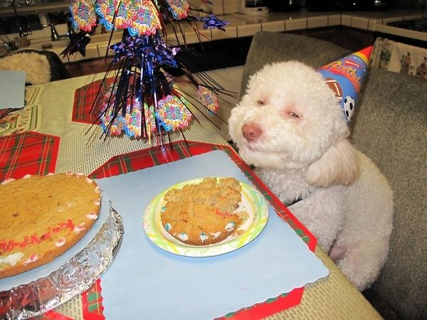 Birthday Dog Enjoys Cookie