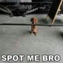 Bodybuilding Dog