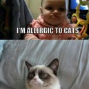 Cat Allergies
