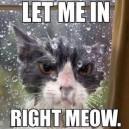 Cat Flap Is Broke