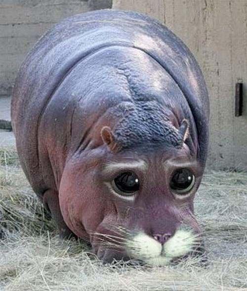 Catopotamus