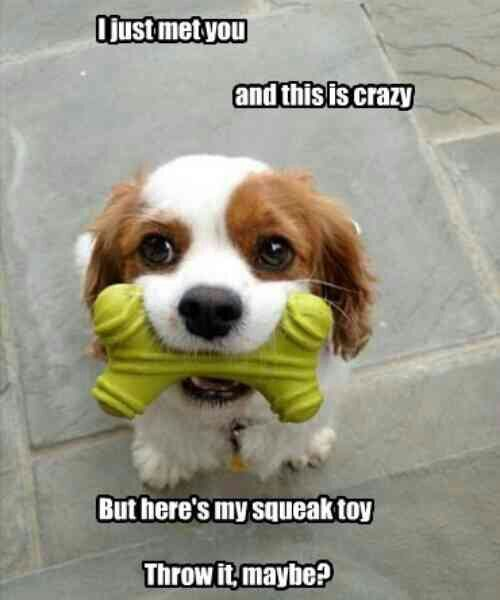Crazy Squeaky Toy