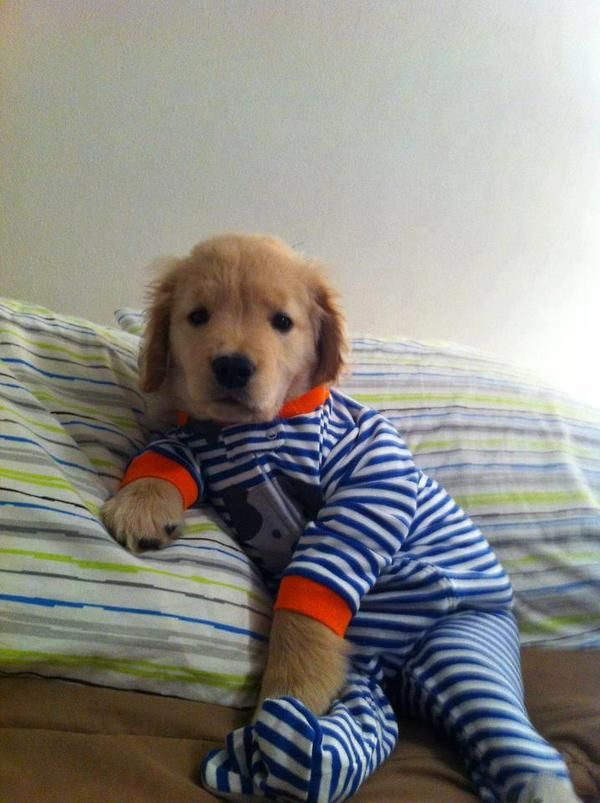 Dog Wears Favorite Pajamas