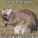 Hare Problems