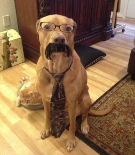 Intelligent Business Dog