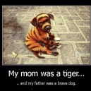Mom was a tiger