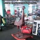Rocking emus