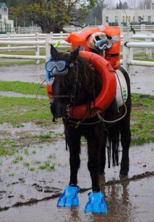 Scuba Pug and Horse