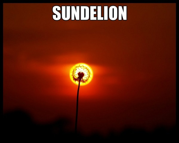 Sundelion