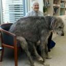 Take A Seat Mr Dog