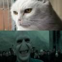 Voldemort Cat