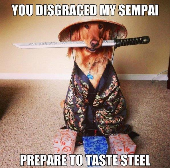 Copai Pup