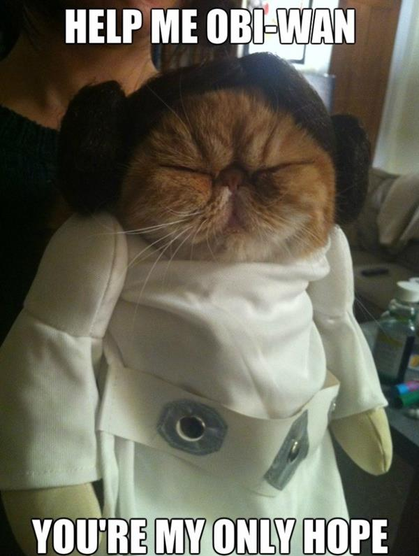 Derpy Cat Leia