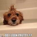 Do I look pretty