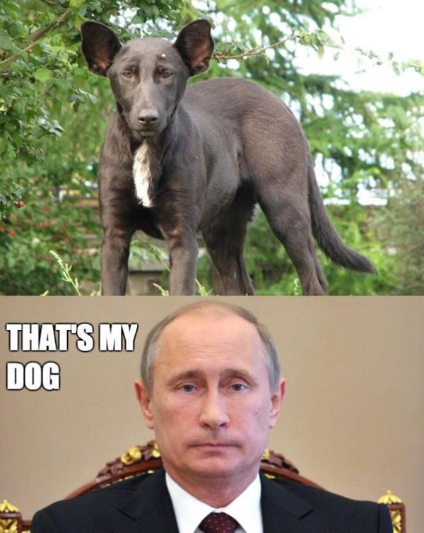 Dog That Looks Like Putin